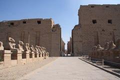 висок опор luxor karnak Египета Стоковое фото RF