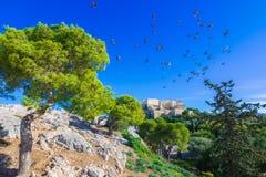 Висок Парфенона на акрополе в Афинах, Греции стоковая фотография rf