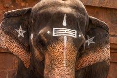 висок слона s Стоковое фото RF