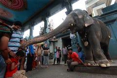 висок слонов стоковые фотографии rf