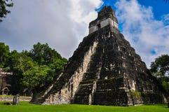 Висок ягуара, руин Tikal, Гватемалы Стоковая Фотография