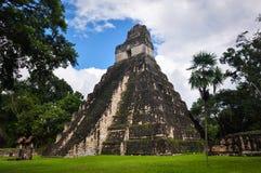 Висок ягуара, руин Tikal, Гватемалы Стоковые Изображения