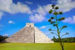 Висок Chichen Itza El Templo Kukulcan Стоковое Фото