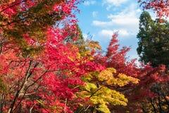 Висок Eikando на пиковой листве осени Стоковые Фотографии RF