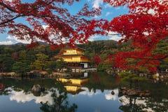 Висок Kinkaku-ji с красными лист в сезоне осени стоковые фотографии rf