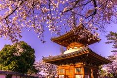 Висок Kitain в весеннем времени на городке saitama Kawagoe в Японии Стоковая Фотография