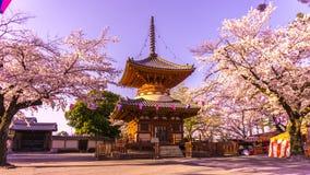 Висок Kitain в весеннем времени на городке saitama Kawagoe в Японии Стоковое фото RF