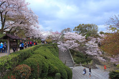 Висок Kiyomizu, Япония Стоковые Изображения RF