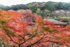 Висок Kiyomizu-dera в сезоне осени в Киото, Японии Стоковое Изображение