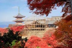 Висок Kiyomizu-dera с красными кленовыми листами под peri реновации Стоковые Изображения