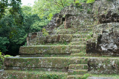 висок maya пущи тропический Стоковое фото RF