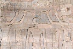висок ombo kom иероглифов Египета Стоковое Фото