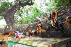 Висок Perillamaram Dharma munishwarar в vediyarendal стоковые изображения rf