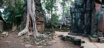 Висок Prohm животиков в Angkor Wat Стоковая Фотография RF