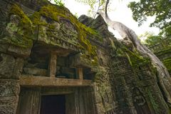 Висок Prohm животиков губит Камбоджу Siem Reap Стоковое Изображение