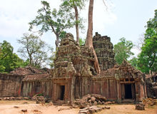 Висок Prohm животиков, Angkor Wat, Камбоджа Стоковое фото RF