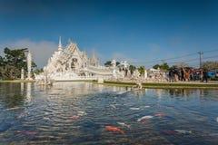 Висок Rong Khun, провинция Chiang Rai, северный Таиланд Стоковые Фотографии RF