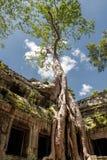 висок ta prohm Камбоджи Стоковое Изображение
