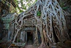 висок ta prohm Камбоджи angkor Стоковое Изображение RF