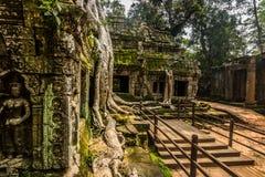висок ta prohm Камбоджи стоковые фотографии rf
