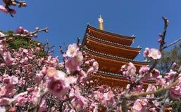 Висок Tochoji, Ume цветет зацветать в Фукуоке, Японии Стоковые Изображения