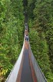 Висячий мост в лесе Стоковая Фотография RF