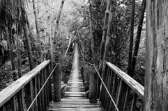 Висячий мост в тропической установке Стоковая Фотография