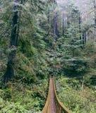 Висячий мост сделанный в лесе стоковые изображения rf