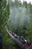 Висячий мост Capilano стоковая фотография