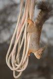 вися веревочка Стоковое фото RF