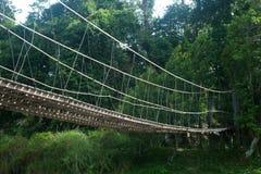 Вися мост в пуще. стоковая фотография rf