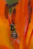 Вися муха Стоковое фото RF