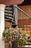 Вися цветок Стоковое фото RF