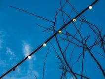 Вися электрическая лампочка Стоковая Фотография RF