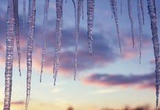 вися icicles Стоковое фото RF