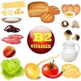 Витамина B 2 в продуктах растений и животных начало  Стоковое Изображение