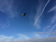 витать чайки Стоковое фото RF