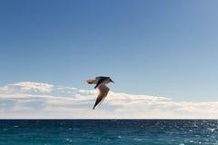 витать чайки Стоковое Фото