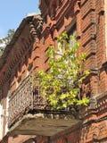 Витальность дерева стоковое изображение