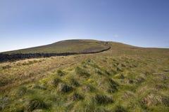 Вихоры травы на диком кабане упали Стоковые Изображения