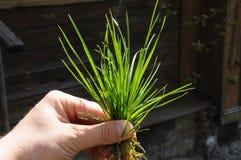 Вихор травы Стоковые Фото