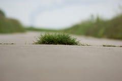 вихор травы Стоковое Изображение