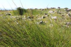 Вихор трав Стоковая Фотография