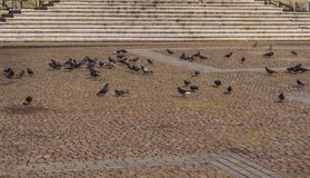 Вихруны в городе стоковое изображение rf