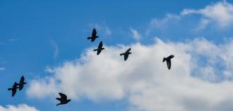 Вихруны в небе стоковые фото