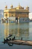 Вихруны на золотистом виске, Amritsar Стоковое Фото