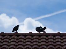 Вихруны на крыше Стоковые Фото