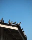 Вихруны на крыше Стоковые Фотографии RF