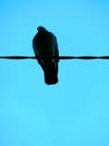 вихруны Стоковая Фотография
