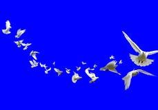 вихруны Стоковые Фотографии RF